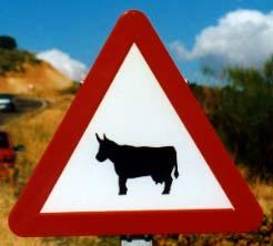 Castille cow