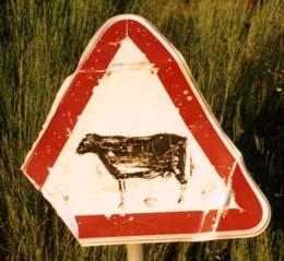Leon cow