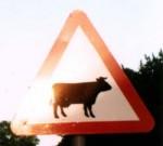 cow-uk-2