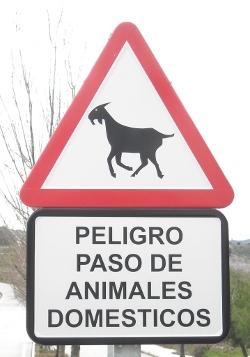 Goat in Colmenar