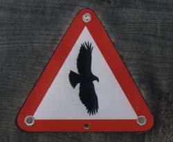 Shropshire Hawk