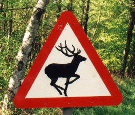 English deer