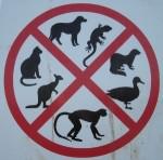 exotic-animals-uk-1