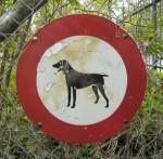 dog-ch-1