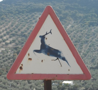 Deer on ascent to the hermitage of the Virgen de la Sierra I