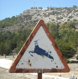Deer on ascent to the hermitage of the Virgen de la Sierra III