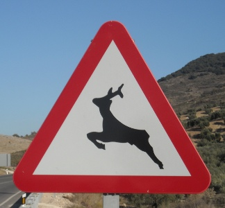Deer at foot of the hermitage of the Virgen de la Sierra
