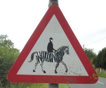 Zebra near Berkeley Castle