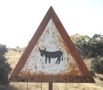 Donkey between Luque and Zuheros