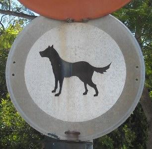 Dog in San Roque