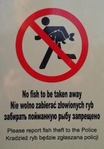 fish-uk-1