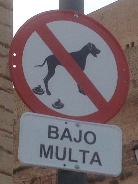 Dog in Alcaudete
