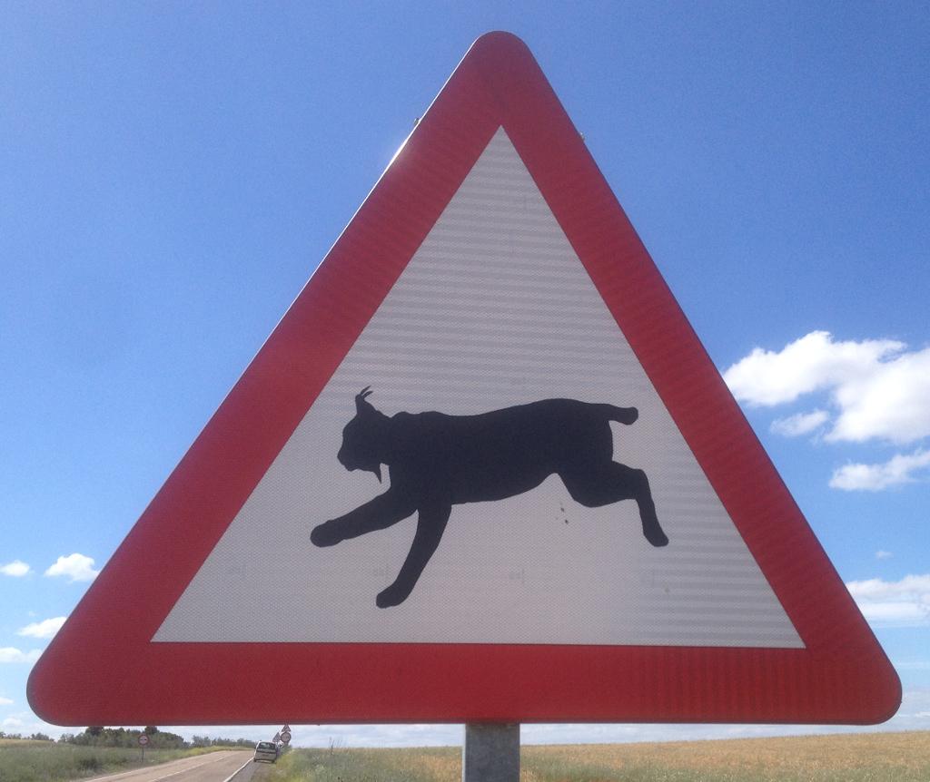 Lynx in Extremadura